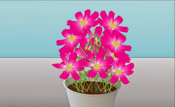 hoa sao nhai 2